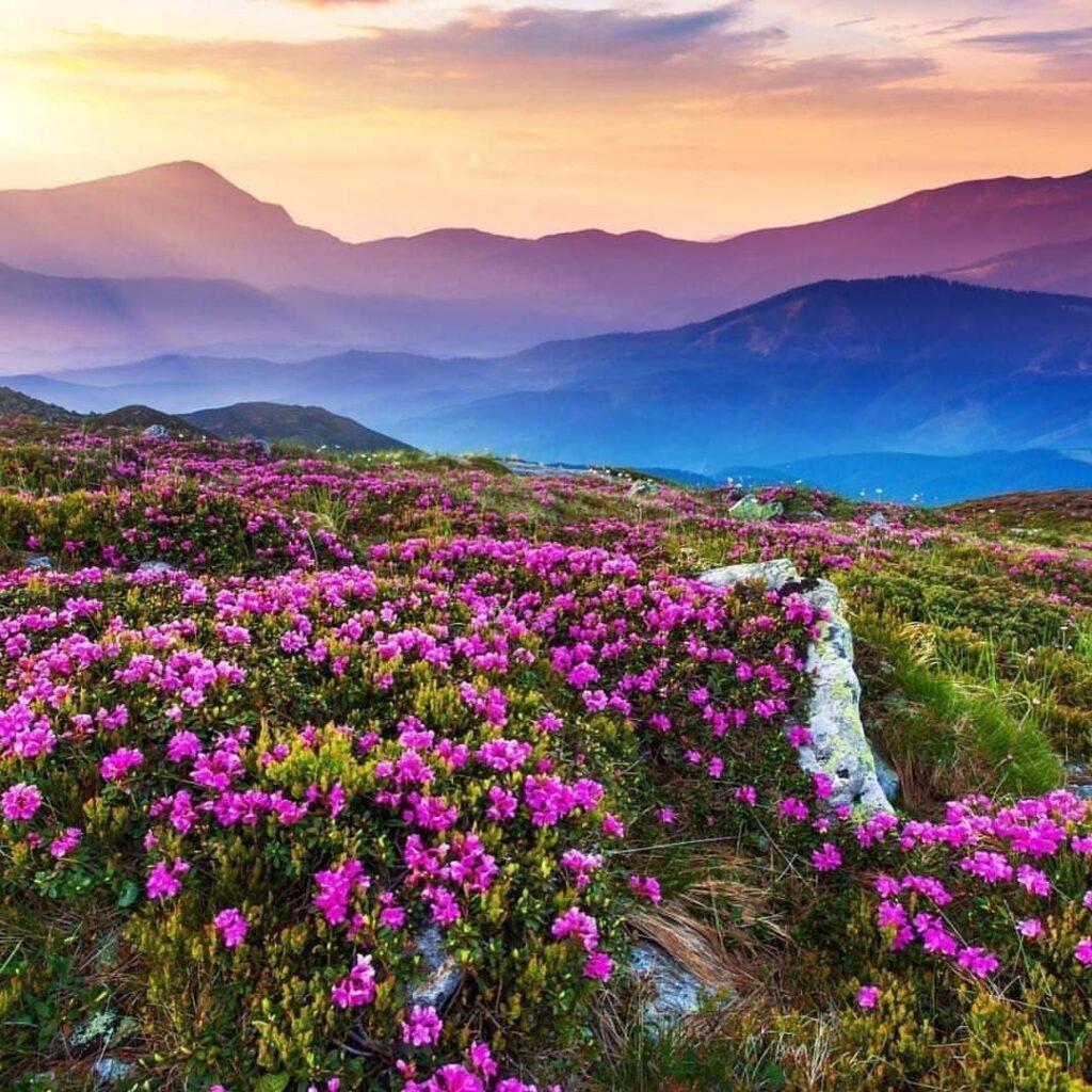 Valley of Flowers Trek 2020: Stunning Beauty; How to Plan ...
